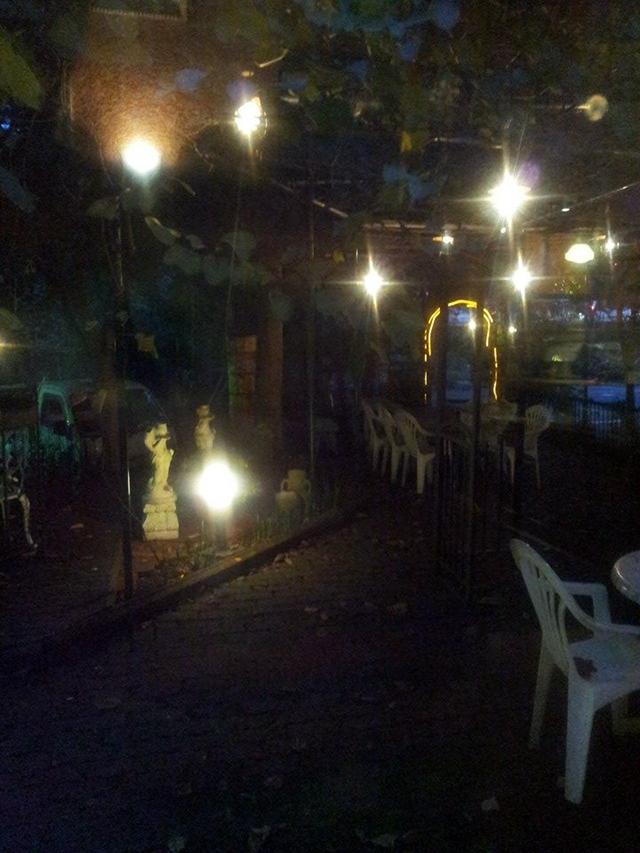 ドリームファームの庭に光が入る