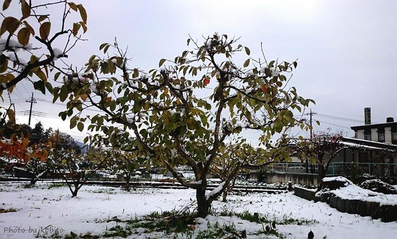 穫後、先日の雪の翌日