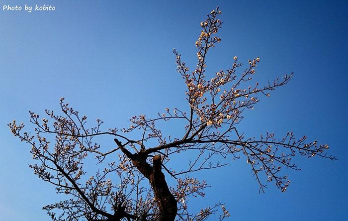 1月の終わり、愛犬との散歩の途中、近所の老木に梅の花が咲いていました。まだまだ寒いけれど、少しずつ春の兆し。