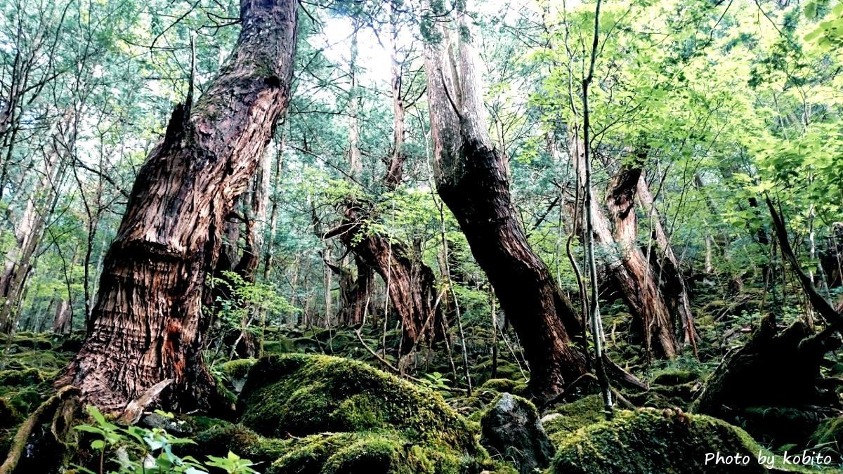 お気に入りの秘密の森へ。仕事の撮影も兼ねてしばしのリラックスタイム。車を少し走らせるだけで、こんな素晴らしい空間へ行くことが出来る。